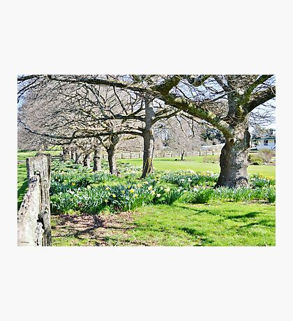 Spring at Ridgley Photographic Print