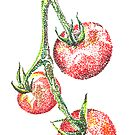 Tomatoes by Claire Robinson