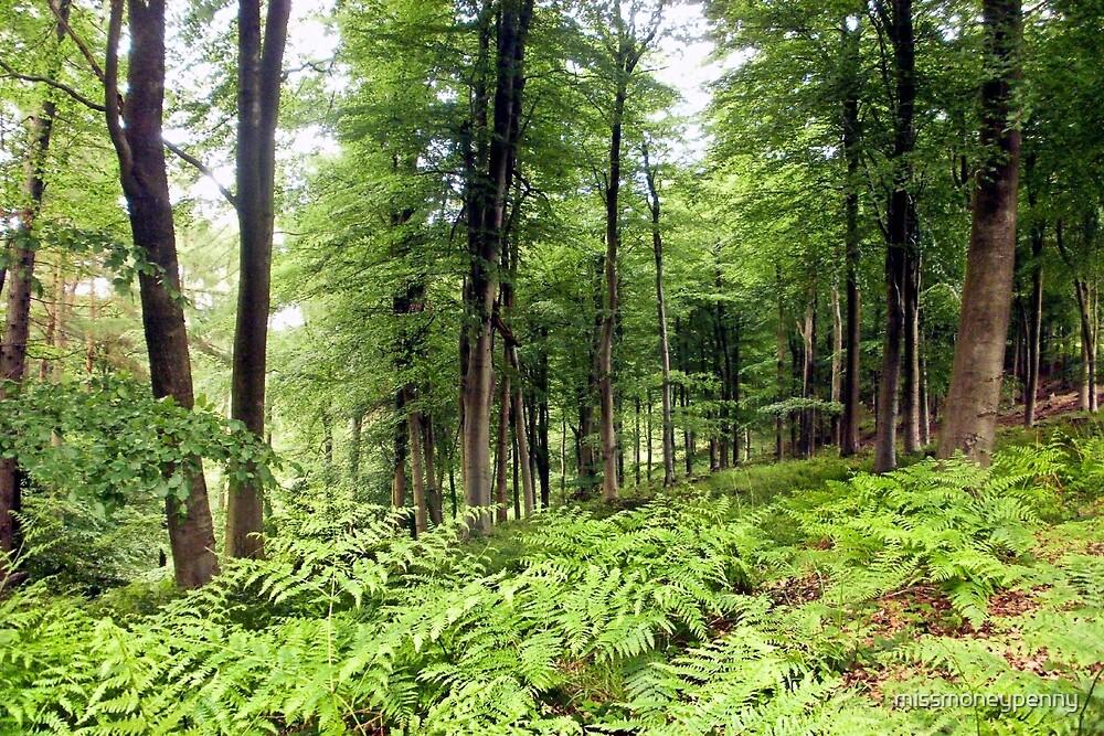 Woodland by missmoneypenny