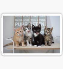 @PURRMINATORS Scout Lumos Nox Suki Sticker