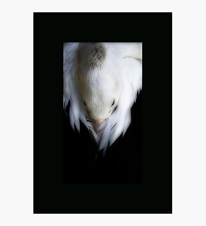 Pelican Dreaming Photographic Print