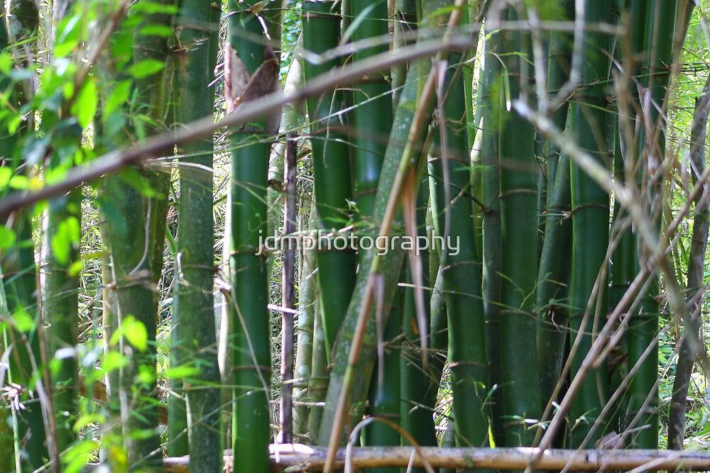 Bamboo (Cuba) by jdmphotography