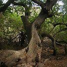 The Tree of Wisdom by Doug Bend