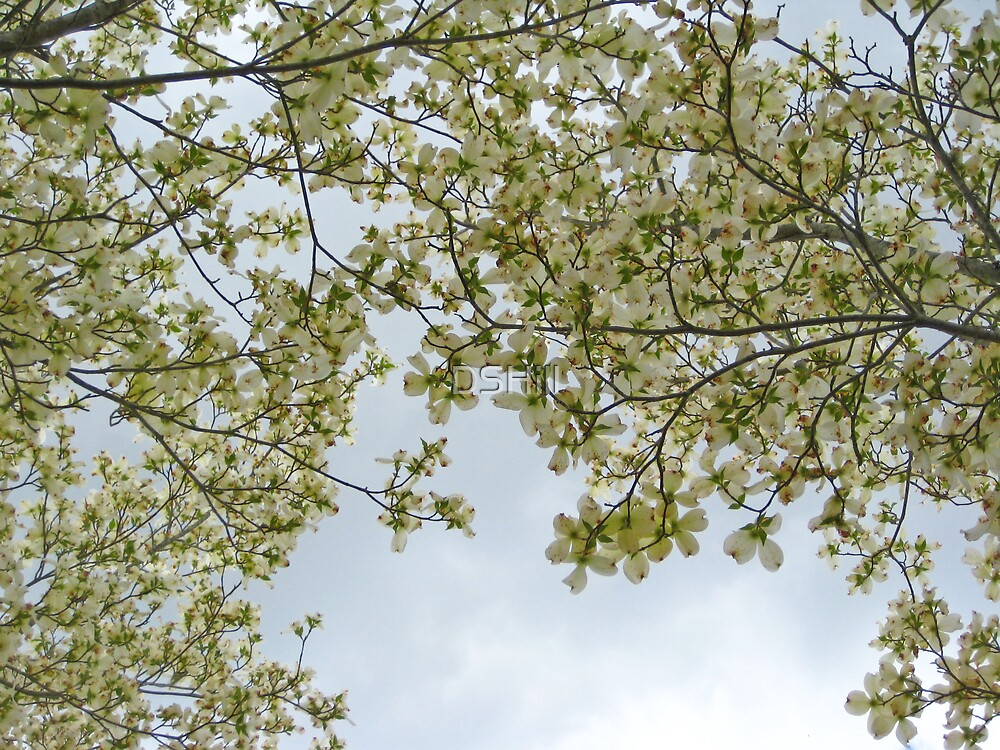 Dogwood by DSHill