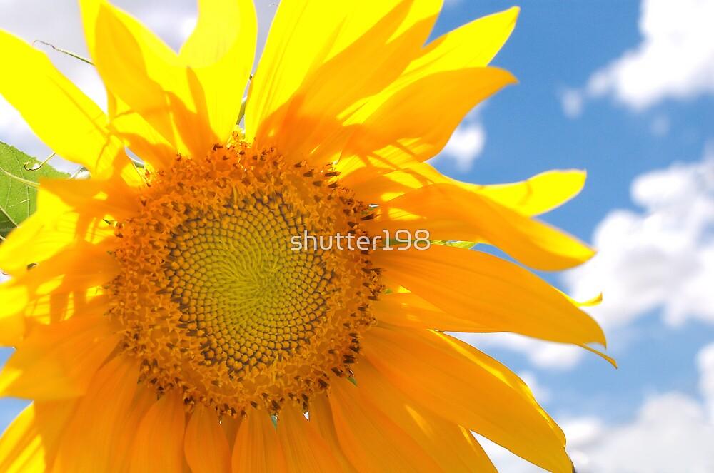 Sunflower Skyward by shutter198