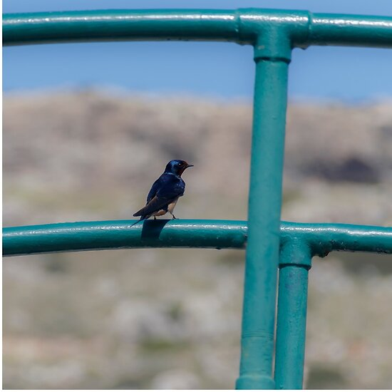 Hummingbird by Emma Grimberg