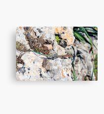 A small colorful lizard Canvas Print