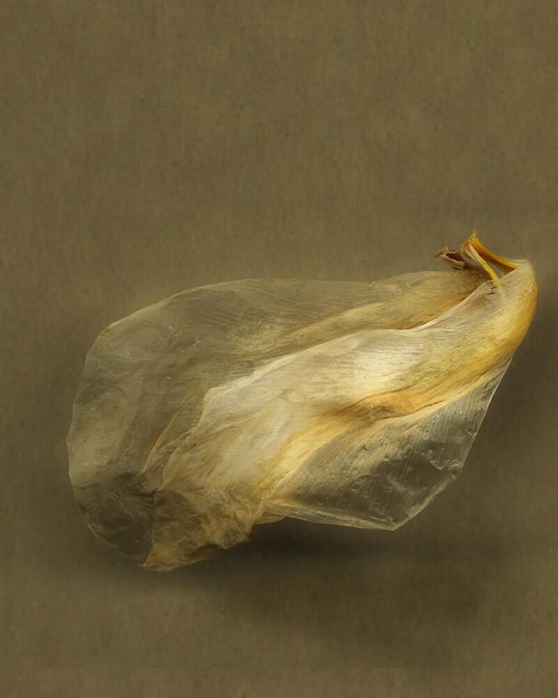 The Last Petal by Jing3011