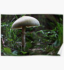 Tiny White Mushroom Poster