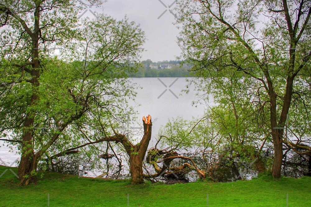 Linlithgow Loch II by Tom Gomez