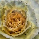 Flower by Annika Strömgren