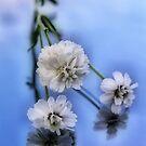 White flowers by Annika Strömgren