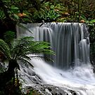 Horseshoe Falls by Imi Koetz