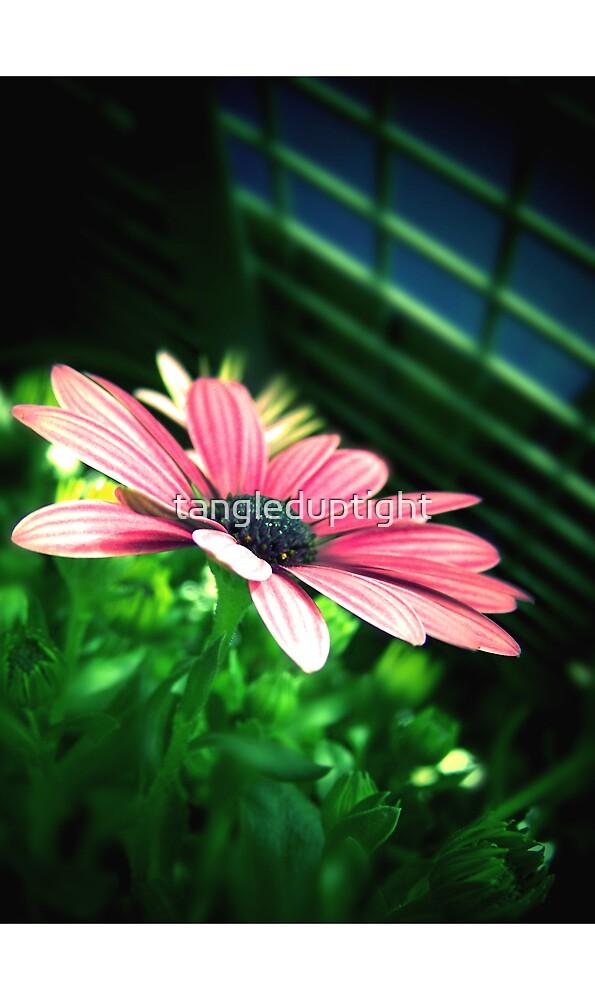 Spring Stories by tangleduptight