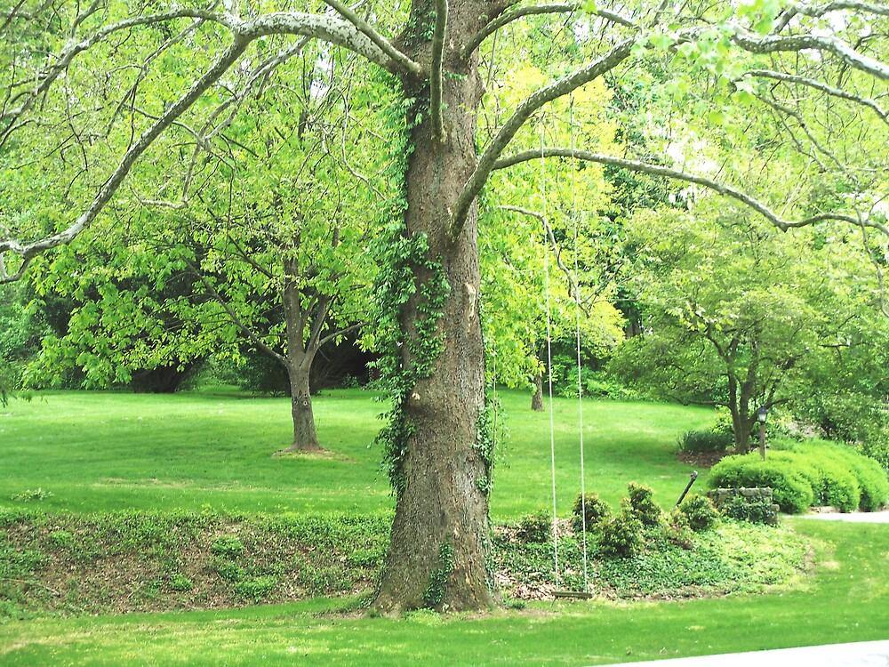Romantic Tree Swing by Judi Taylor