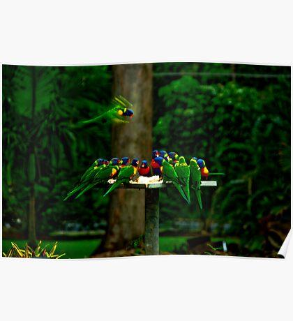 Not another bird shot! Poster