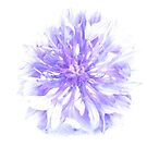 Cornflower considered by Jax Blunt
