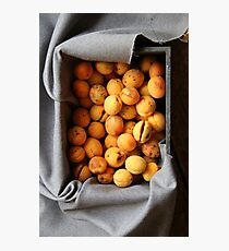 ripe apricots in wooden box Photographic Print
