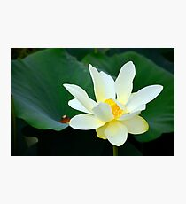 Water Lily, Hatchie Wildlife Refuge, Tennessee Photographic Print