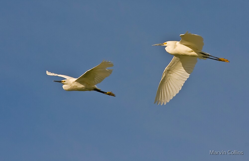 Two Snowy Egrets by Marvin Collins