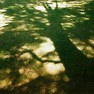 Shadow by Catherine Davis