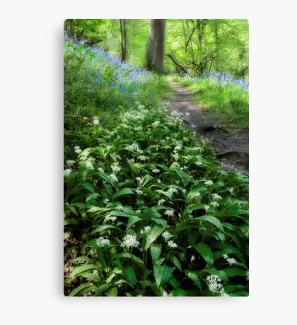 Ramsons and Bluebells Canvas Print