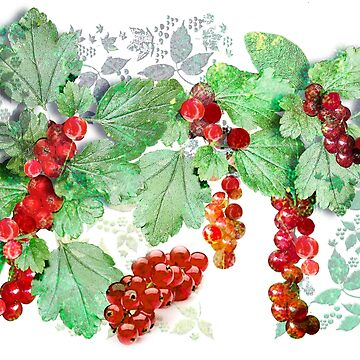 British Wild Redcurrants by PrivateVices