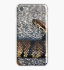 Cottonmouth Stare iPhone Case/Skin