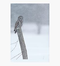 Watching over winter... Photographic Print