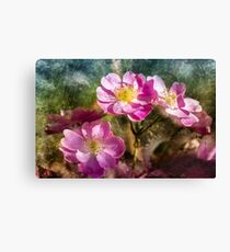 Branch of rose blossoms Canvas Print