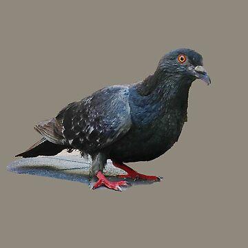 Pigeon by ATJones