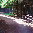 Shady Path, Prince Edward Island, Canada by Shulie1