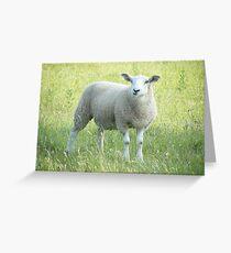 Sheep (Somerset) Greeting Card