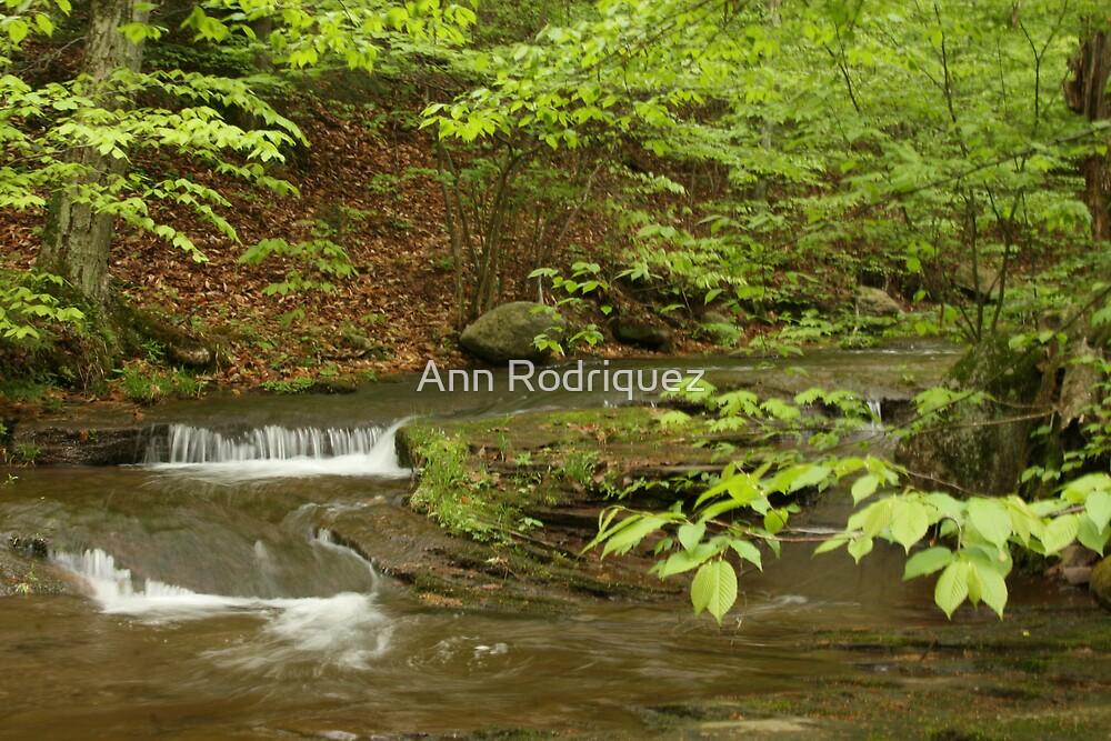 A Thousand Times Green by Ann Rodriquez