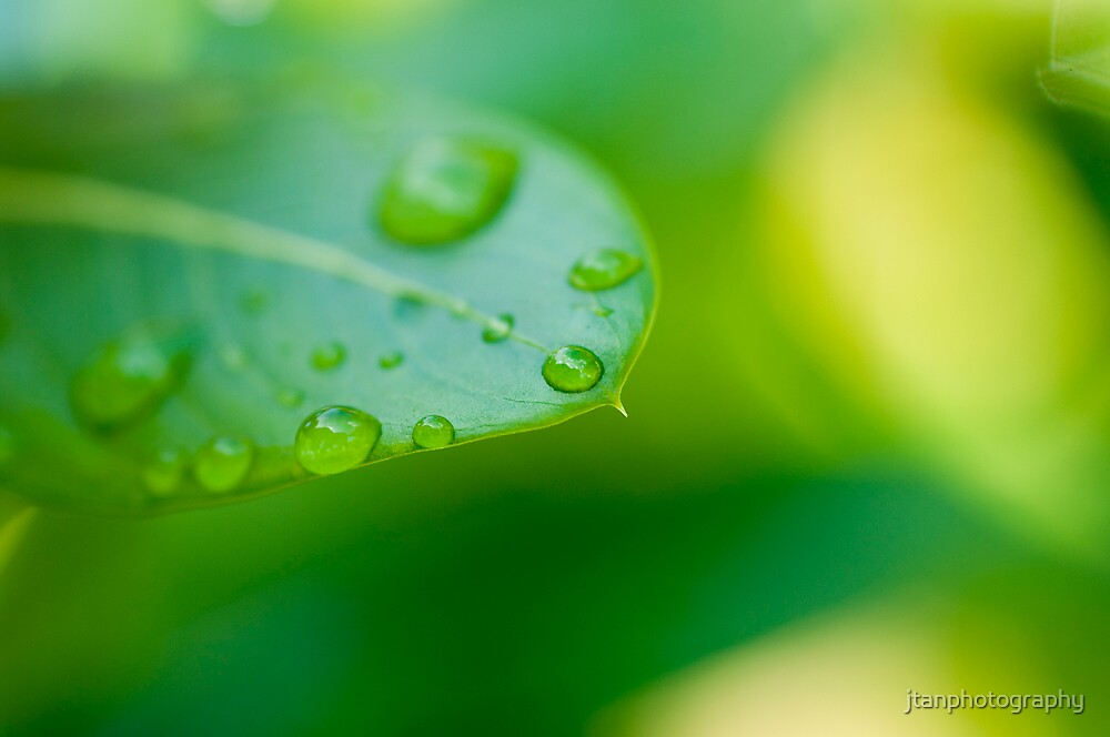 Green Droplets.. by jtanphotography