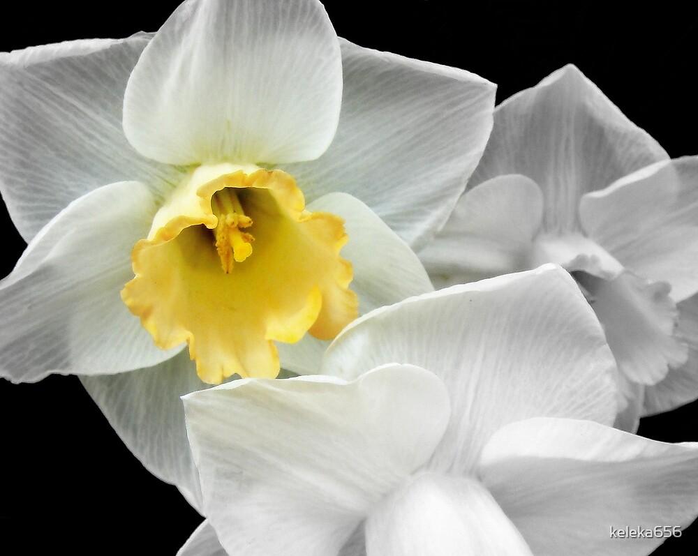 Delicate Beauty by keleka656