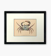 Vintage Mangrove Crab Illustration (1902)  Framed Print