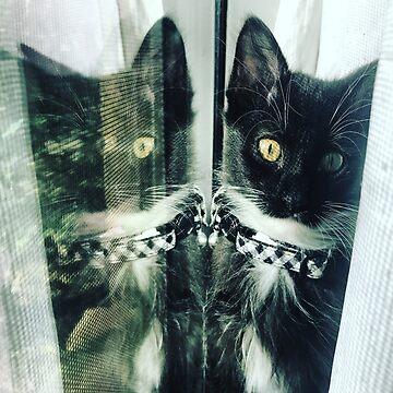 Cat Reflection  by NonoZitro76