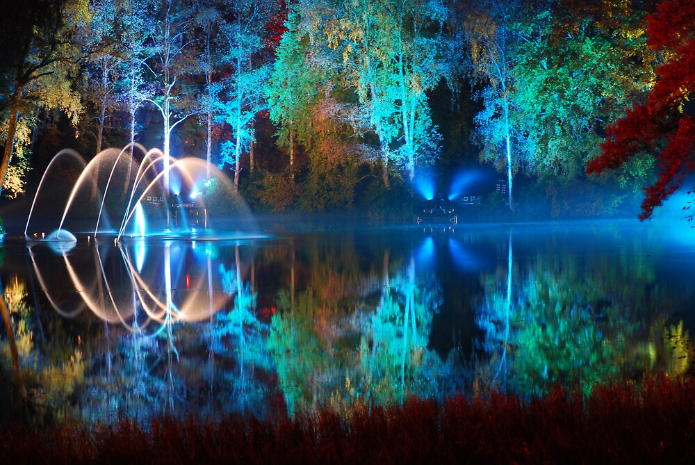 THE ENCHANTED FOREST by graeme181