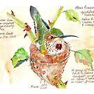 Phoebe, der Allens Kolibri - botanische Illustration von Maree Clarkson