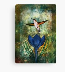 Hummingbird and Crocus Canvas Print