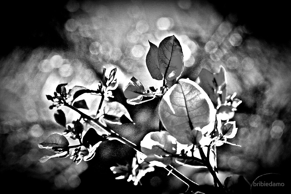 Leaves me Black and White by bribiedamo