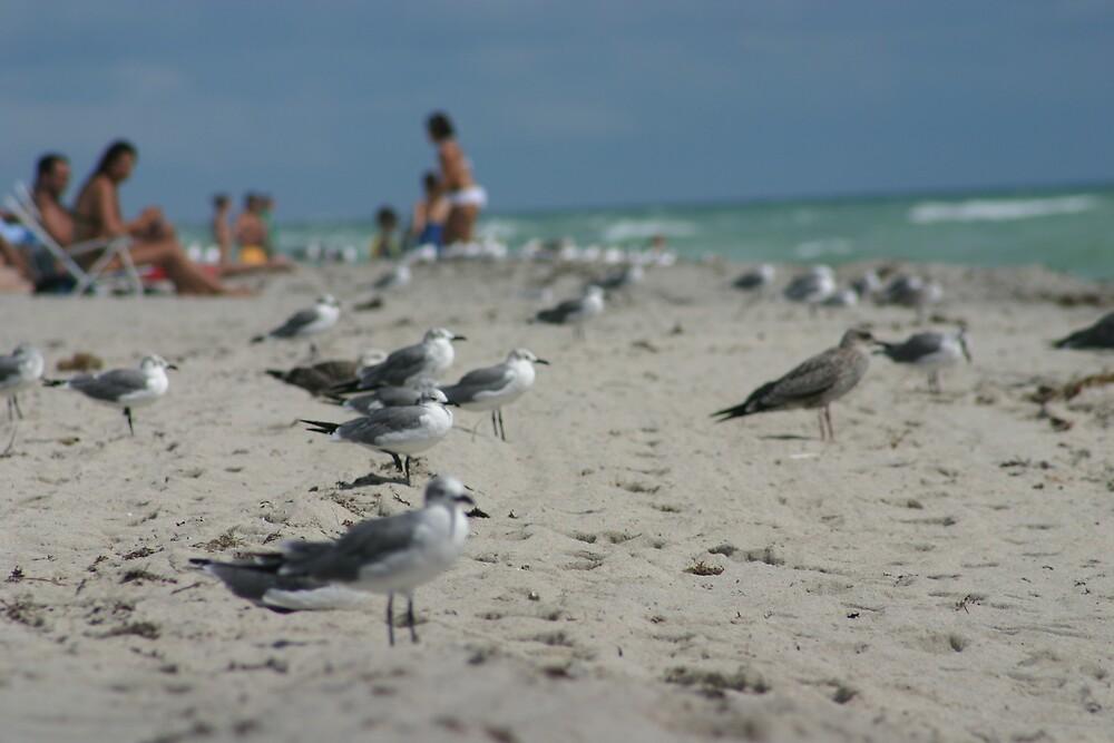miami beach 2007 by yoyo57
