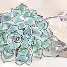 Echeveria imbricata von Maree Clarkson
