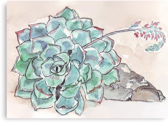 Echeveria imbricata  by Maree Clarkson