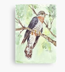 Red-chested Cuckoo (Piet-My-Vrou) Canvas Print