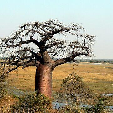 Baobab over Chobe  by grmahyde