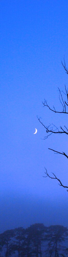 Morning Moon by Texico