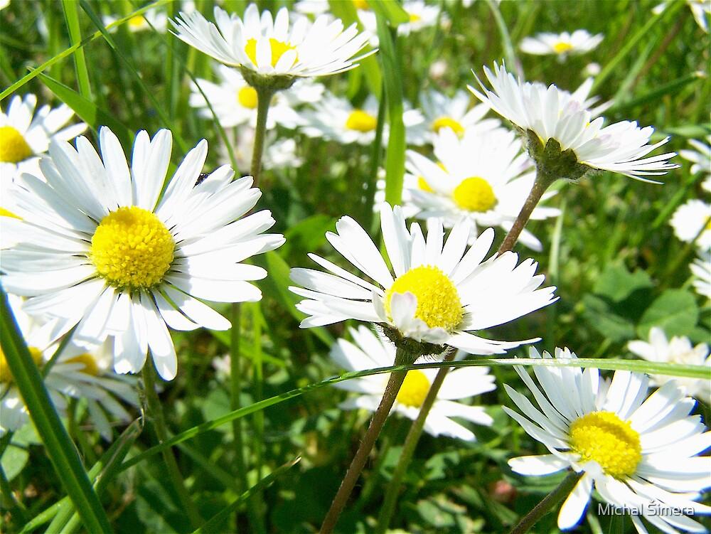 flowers by Michal Šimera