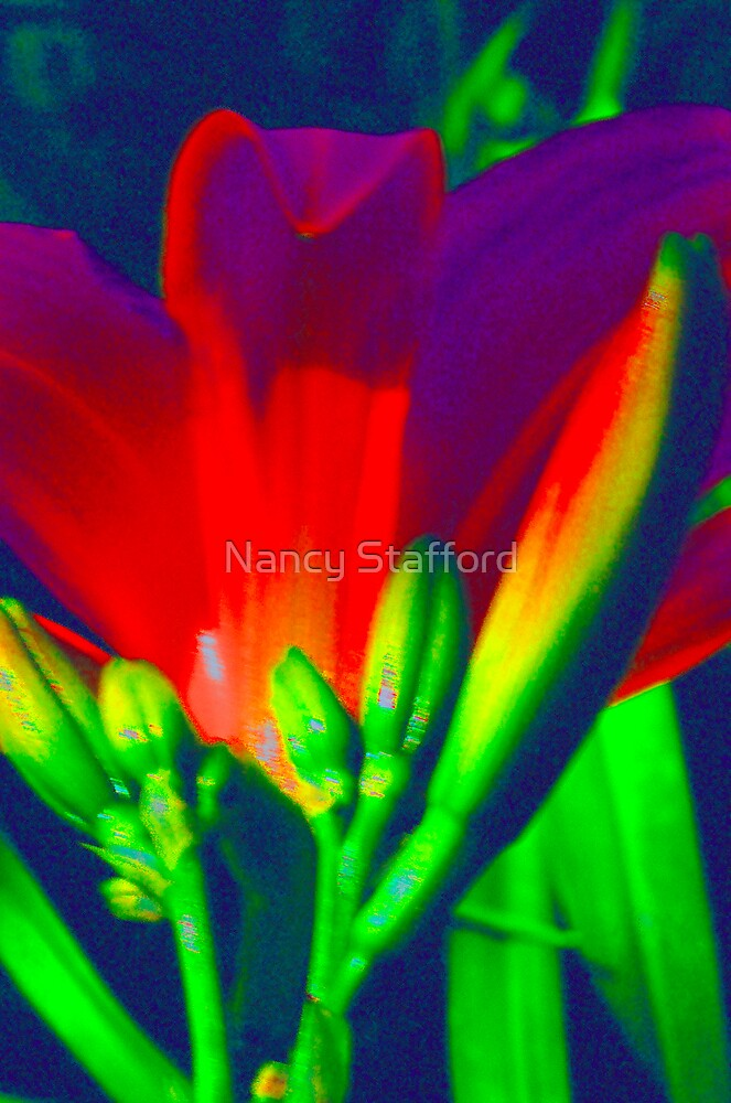Flower of Color by Nancy Stafford